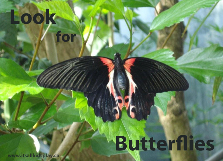 Look for butterflies
