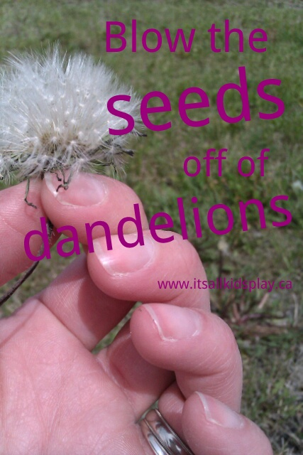 Dandelion Seeds and Dandelion games for kids